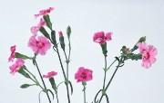 鲜花特写 2 16 鲜花特写 花卉壁纸