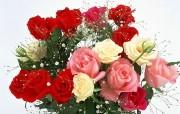 鲜花特写 2 10 鲜花特写 花卉壁纸
