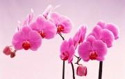 鲜花特写 2 7 鲜花特写 花卉壁纸