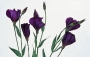 鲜花特写 2 6 鲜花特写 花卉壁纸