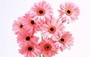 鲜花特写 2 2 鲜花特写 花卉壁纸