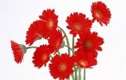 鲜花特写 2 1 鲜花特写 花卉壁纸