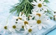 白色花朵 1 20 白色花朵 花卉壁纸