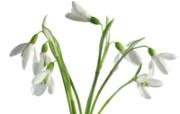 白色花朵 1 12 白色花朵 花卉壁纸