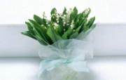 白色花朵 1 2 白色花朵 花卉壁纸