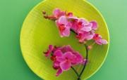 花艺大餐 1 11 花艺大餐 花卉壁纸