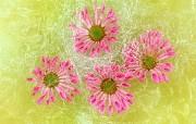 鲜花特写 1 18 鲜花特写 花卉壁纸