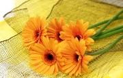 鲜花特写 1 14 鲜花特写 花卉壁纸