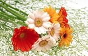 鲜花特写 1 9 鲜花特写 花卉壁纸