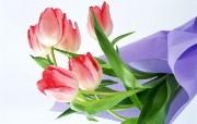 鲜花特写 1 5 鲜花特写 花卉壁纸