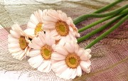 鲜花特写 1 3 鲜花特写 花卉壁纸