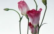 鲜花装饰 10 19 鲜花装饰 花卉壁纸