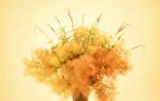 鲜花装饰 10 17 鲜花装饰 花卉壁纸