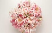 鲜花装饰 10 14 鲜花装饰 花卉壁纸