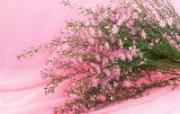 鲜花装饰 10 10 鲜花装饰 花卉壁纸