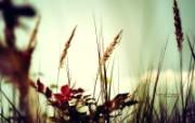 野草的天空 印象主义花草摄影 印象主义LOMO风格花草随拍 花卉壁纸