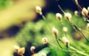 柔和明亮的自然 柔和诗意花草摄影 印象主义LOMO风格花草随拍 花卉壁纸