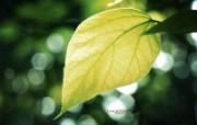 夏天的绿叶 捕捉自然之美壁纸 印象主义LOMO风格花草随拍 花卉壁纸