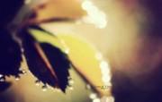 雨后的露珠 印象主义花草摄影 印象主义LOMO风格花草随拍 花卉壁纸