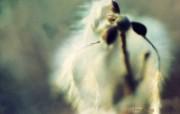 凋零的风景 印象主义花草摄影 印象主义LOMO风格花草随拍 花卉壁纸