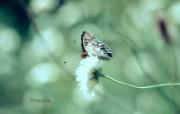 蝴蝶花 影调柔和暗调风景壁纸 印象主义LOMO风格花草随拍 花卉壁纸