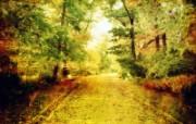 落叶小径 印象主义花草摄影 印象主义LOMO风格花草随拍 花卉壁纸
