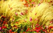 秋色印象 自然的明亮色彩壁纸 印象主义LOMO风格花草随拍 花卉壁纸
