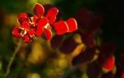 妖艳野花 影调柔和暗调风景壁纸 印象主义LOMO风格花草随拍 花卉壁纸
