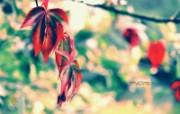 美的色彩 印象主义花草摄影 印象主义LOMO风格花草随拍 花卉壁纸