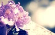 柔和与忧伤 柔和诗意花卉摄影 印象主义LOMO风格花草随拍 花卉壁纸