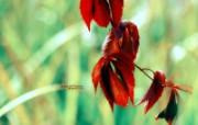 明亮红叶 印象主义花草摄影 印象主义LOMO风格花草随拍 花卉壁纸