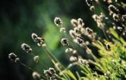 自然花草之美 印象主义花草摄影 印象主义LOMO风格花草随拍 花卉壁纸