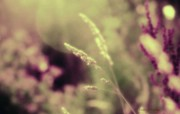 自然花草之美 花草随拍壁纸 印象主义LOMO风格花草随拍 花卉壁纸