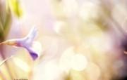 喇叭花 柔和诗意风格摄影 印象主义LOMO风格花草随拍 花卉壁纸