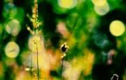 午后的花草 花草随拍壁纸 印象主义LOMO风格花草随拍 花卉壁纸
