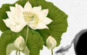 艺术风格花卉图案插画设计 白色荷花 艺术花卉插画图案 艺术风格花卉图案插画设计第二集 花卉壁纸