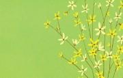 花卉图形壁纸 花卉图案设计壁纸 艺术与抽象花卉壁纸 花卉壁纸