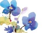水彩花卉壁纸 抽象水彩花卉壁纸 艺术与抽象花卉壁纸 花卉壁纸