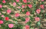 1920郁金香 1 20 1920郁金香 花卉壁纸