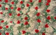 1920郁金香 1 7 1920郁金香 花卉壁纸