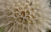 超大叶脉花草 1 1 超大叶脉花草 花卉壁纸