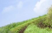 绿色草地 1 19 绿色草地 花卉壁纸