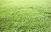 绿色草地 1 17 绿色草地 花卉壁纸