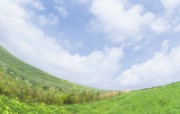 绿色草地 1 16 绿色草地 花卉壁纸