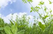 绿色草地 1 14 绿色草地 花卉壁纸