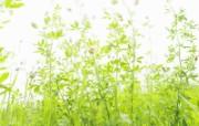 绿色草地 1 13 绿色草地 花卉壁纸