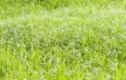 绿色草地 1 10 绿色草地 花卉壁纸
