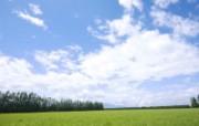 绿色草地 1 5 绿色草地 花卉壁纸