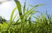 绿色草地 1 2 绿色草地 花卉壁纸