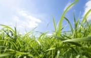 绿色草地 1 1 绿色草地 花卉壁纸